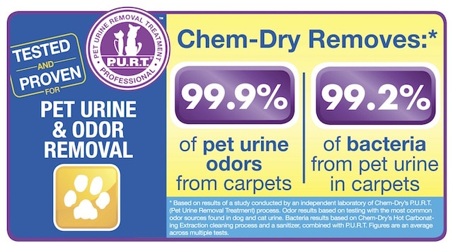 healthy pet urine cleaning