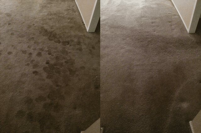 before after carpet cleaning 02